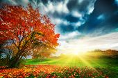 Autumn, fall landscape in park. Colorful leaves, sunny blue sky at sunset