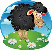 Black sheep with blade of grass on color background