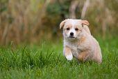 Puppy Runs