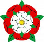 Tudor Rose - Illustration