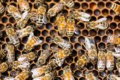 stock photo of swarm  - Directly above shot of honeybees swarming on comb - JPG
