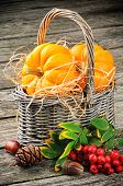 Autumn Still-life With Fresh Pumpkins In Basket