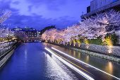 stock photo of night-blooming  - Kyoto - JPG