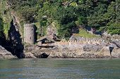 stock photo of dartmouth  - Kingswear castle by the River Dart in Devon - JPG