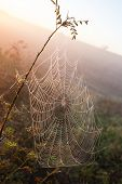 cobweb of a spider against sunrise
