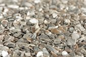Seashell grit