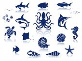 stock photo of stingray  - Marine life icon set - JPG