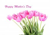 Beautiful pink tulips, isolated on white