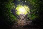 stock photo of deep  - Natural tunnel in tropical jungle forest - JPG