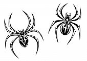picture of black widow spider  - black danger spiders isolated on white background for tattoo - JPG