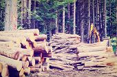 stock photo of afforestation  - Sawed Firewood in the Forest Instagram Effect - JPG