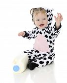 An adorable baby girl dressed as a holstein cow.  She's happily waving as she sits by a half gallon