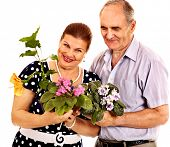 Old couple holding flower. Isolated.