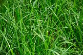 Grass View With Shallow Depth Of Field