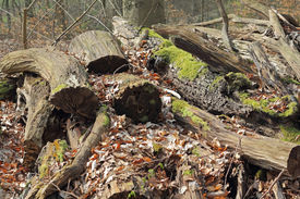 foto of biodiversity  - A Stack with rotten wood in a forest - JPG