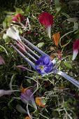 Edible Flower On A Fork
