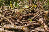 image of epiphyte  - destroying National Park Yasuni south america - JPG