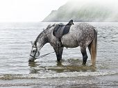 Sea Landscape With  Horse.