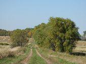 Trees along the Prairie Trail