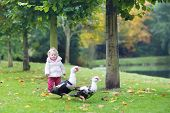 Funny Little Baby Girl Playing With Wild Ducks In A Beautiful Autumn Park