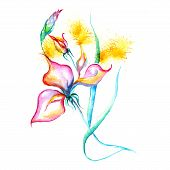 Watercolor flowers - pink iris, splashes, drops on paper or canvas - vector illustration