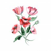 Watercolor flowers - red poppies with leaves - vector illustration