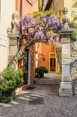 Entrance to the courtyard bordered by flowering wisteria. Lake Garda, Torbole, Northern Italy