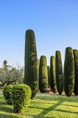 Park with cypresses in Sirmione, Lake Garda, Northern Italy