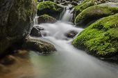 Small Waterfall And Moss