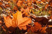 autumn leaves sunlight