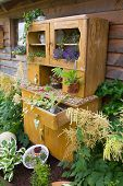 Old cupboard with flowers growing inside it