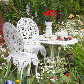 Garden furniture set with flowers growing in garden
