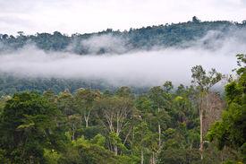 image of rainforest  - Amazon View of the tropical rainforest Rio Napo Misahualli Ecuador  - JPG
