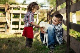 pic of shepherdess  - Children feeding little lamb in the garden - JPG
