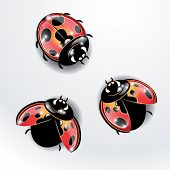Three Red Ladybugs.