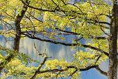Trees At Lake Kochelsee