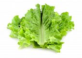 stock photo of romaine lettuce  - Fresh green lettuce isolated on a white background - JPG