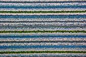 The Carpet Texture