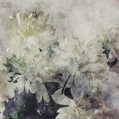 art grunge floral cool sepia vintage paper textured background with white asters