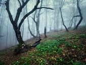 Mysterious forest with fog in autumn