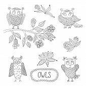 Cute cartoon vector owls, flowers, brunche.