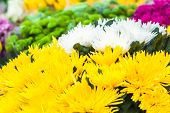 Multicolor fresh flowers spring background