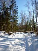 Track of snowmobile in the woods
