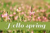 Beautiful wild flowers in the field. Hello Spring concept