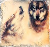 Wolfs Airbrush Painting On Canvas Color Background