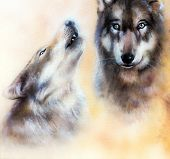 Pair of wolves on yelow background