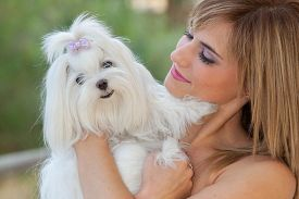foto of maltese  - owner holding pet lapdog - JPG