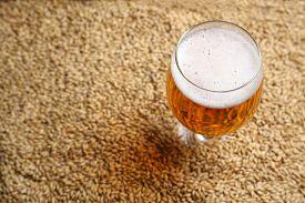 image of malt  - Glass full of light beer standing on barley malt grains - JPG