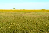 pic of grassland  - Open and still green grassland with herbs and flowers - JPG