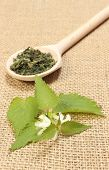 foto of nettle  - Fresh stinging nettles with white flowers and dried nettle on wooden spoon lying on jute canvas - JPG